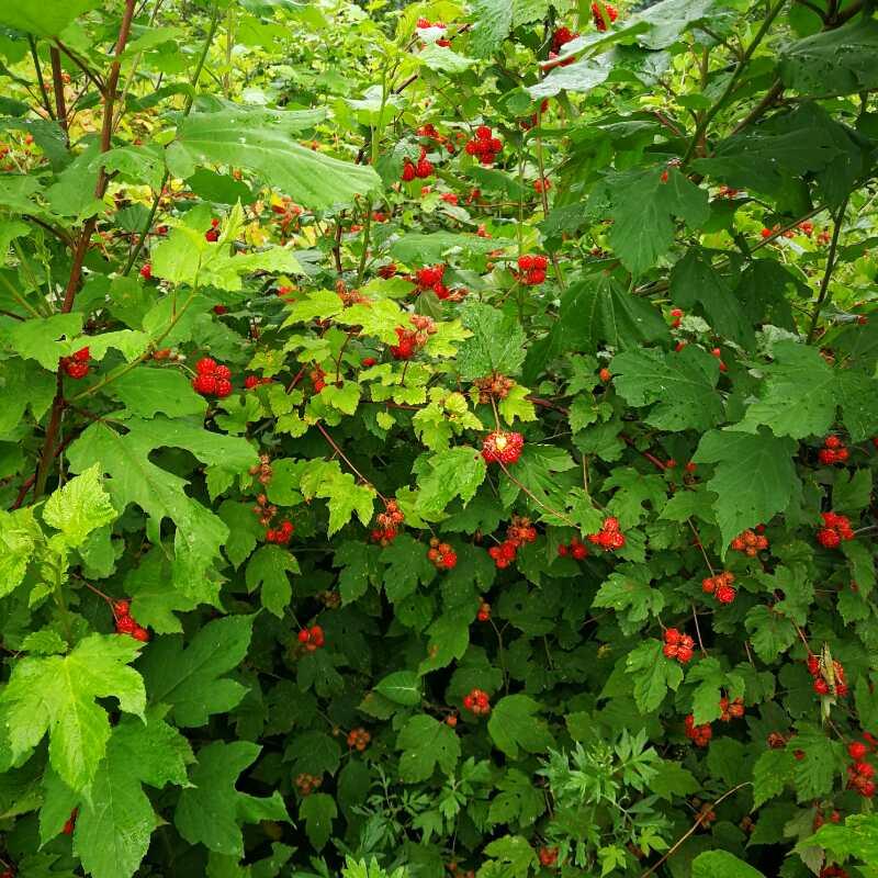 涉案果树林木及林下作物核查价格评估项目