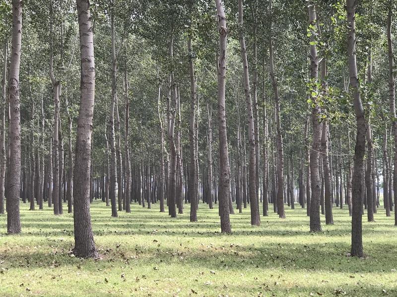林权价格司法核查价值评估