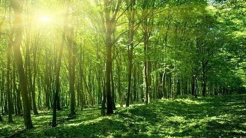 森林资源价格评估