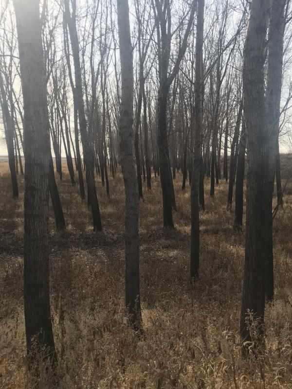 森林资源价格评估讲解我国森林资源特征