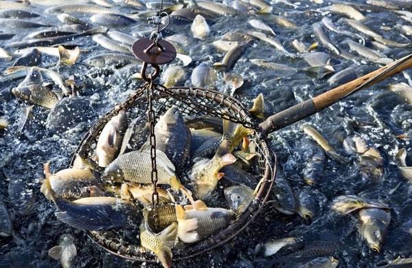海洋渔业资产评估怎么看待海洋生物资源价值