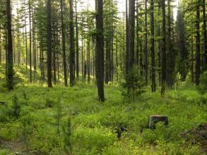 森林资源资产评估存在的问题