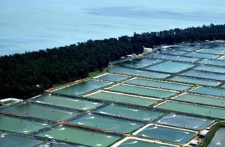 什么是水产资产评估?