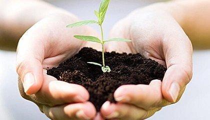 农作物新品种价值评估方法的选择