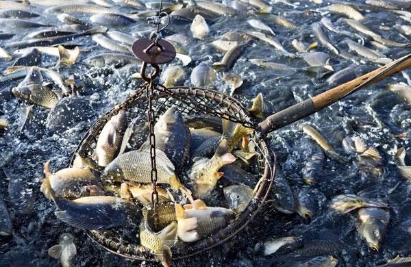 海洋水产及陆地渔业资源资产评估