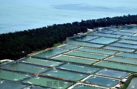 水产养殖蟹池、虾池、海参圈、鱼塘等价格评估