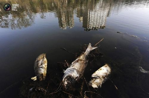海洋水产及陆地渔业资源环境损害评估