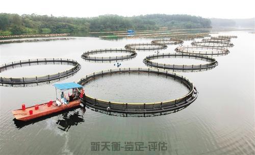 陆地河流水库鱼塘损失评估