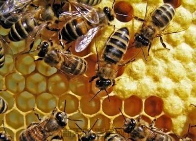 蜜蜂与林蛙核查与损失价格评估