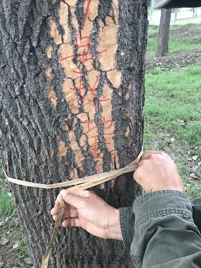 森林资源林权抵押司法评估