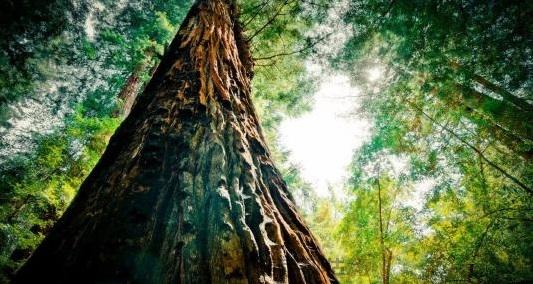 生态系统与服务功能的存在价值