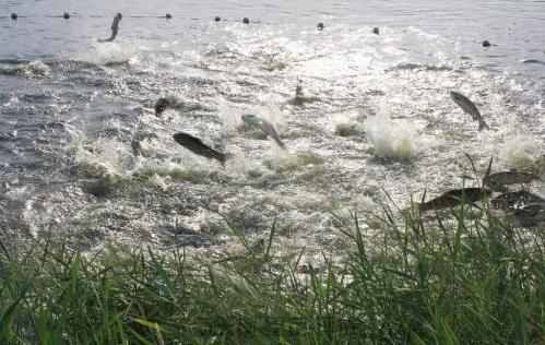 哈尔滨渔业资源-养殖圈评估