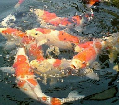 观赏鱼类浮游生物核查价格评估