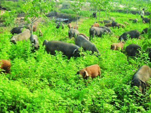 农业养殖资产评估-损失核查价格评估