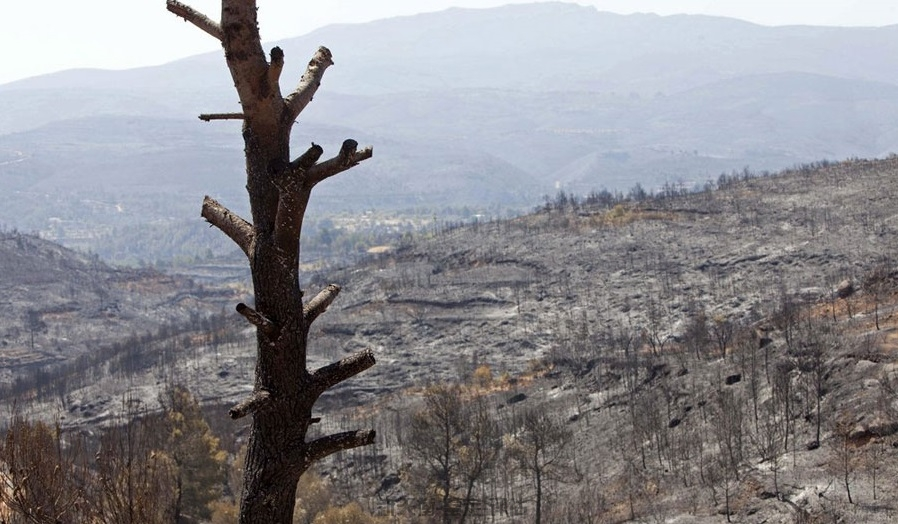 森林园林景区损失评估-无形资产价值评估