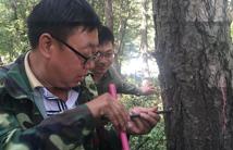 森林资源灾害损失面积程度核查评估