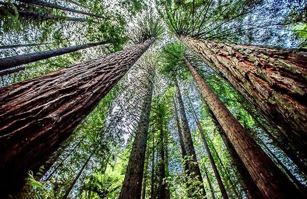 生态环境资源服务功能系统调查评估