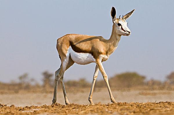 野生动植物损失及价格评估