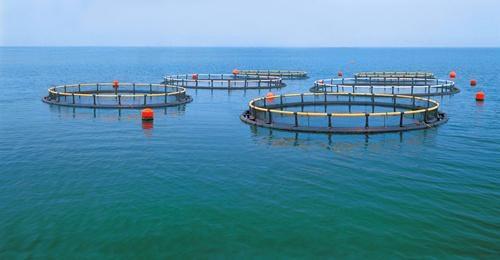 江河水库渔业评估-资产损失、价格评估