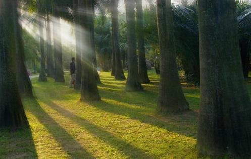 生态园林景观破坏与森林景观游园价值评估