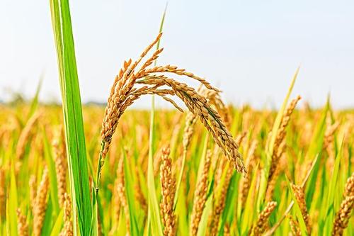 农业产品环境损害鉴定价格评估