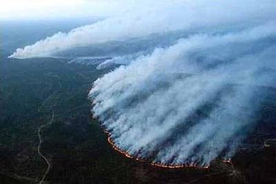 火烧林木果树景观资产损失核查司法评估