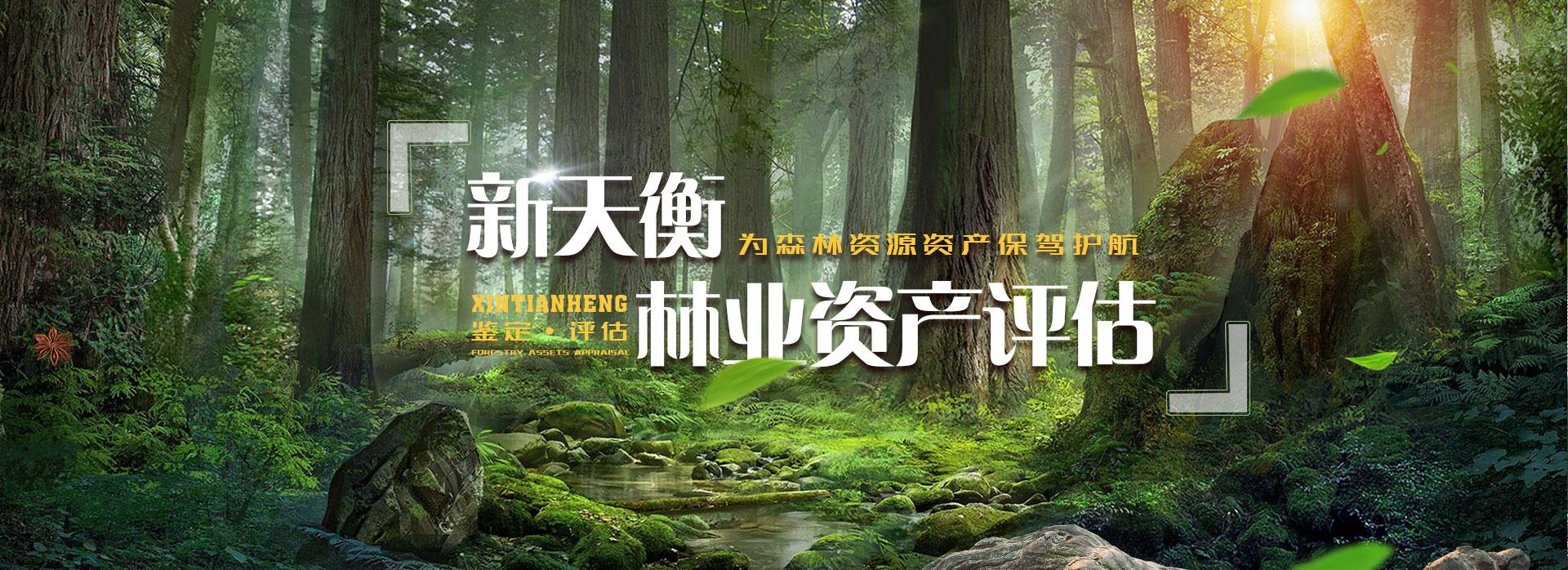 森林资源资产价格评估