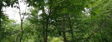 林权果树资产价值评估