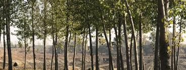 环境损害鉴定矿区塌陷损失评估