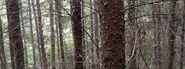 土口子森林资源资产核查价格评估