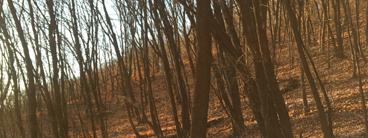 涉案森林资源资产核查