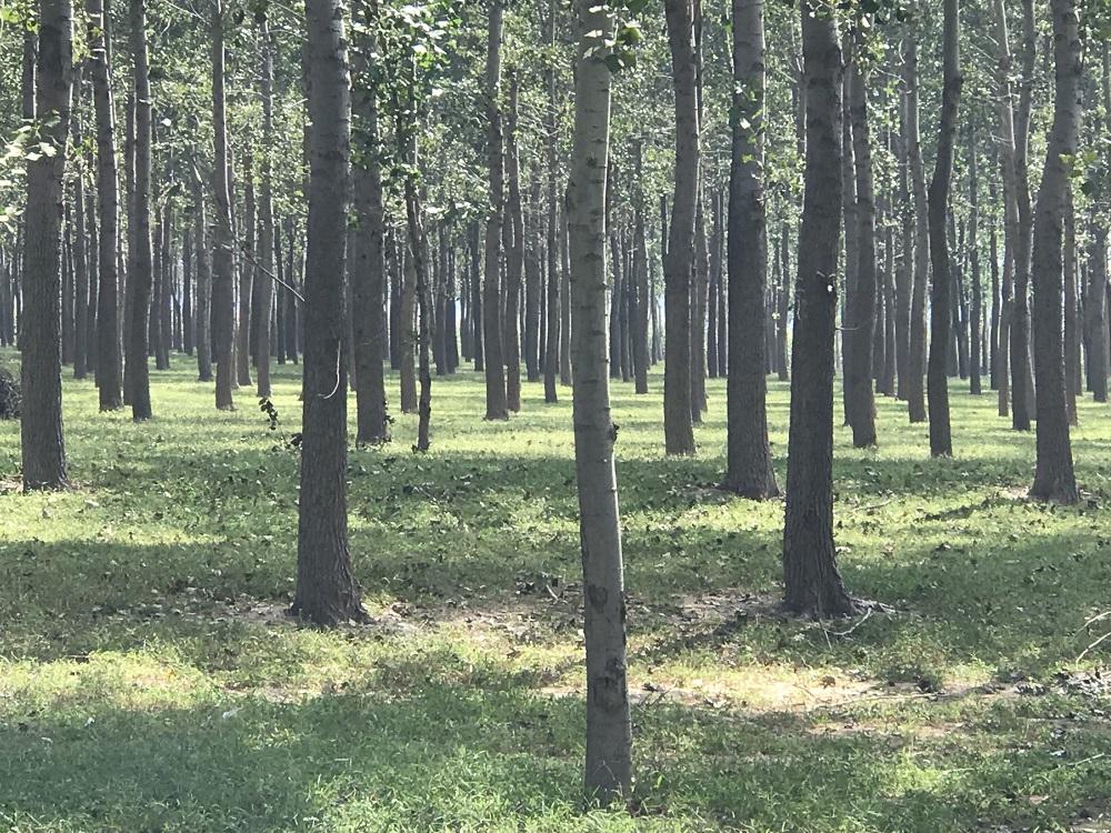 林权资产司法执行价格评估