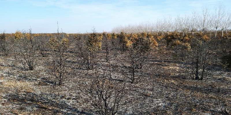 涉案珍惜苗木被火烧损失鉴定