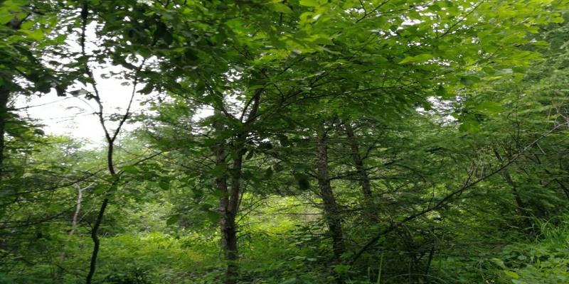 森林资源林下经济鉴定司法评估