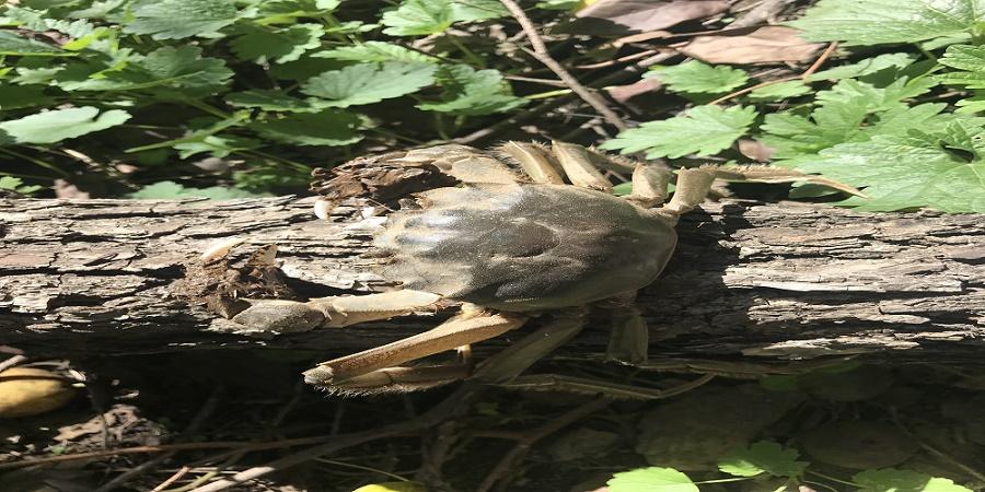 涉案环境污染土地果树鱼塘损害鉴定核查评估